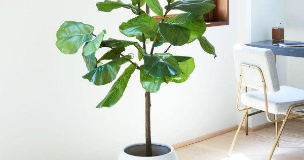 Top 18 loài cây trồng trong nhà không cần ánh sáng, dễ chăm sóc