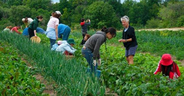 Xu thế phát triển farmstay, tiềm năng hay bẫy lợi nhuận?